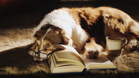Tired-Dog-Wearing-Glasses-Relaxing-Next-To-Book-
