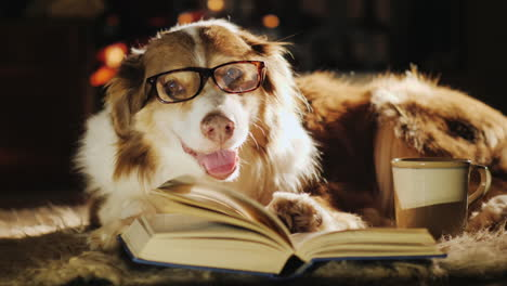 Dog-Wearing-Glasses-Beside-Open-Book-and-Fireplace-Cup-of-Tea-02