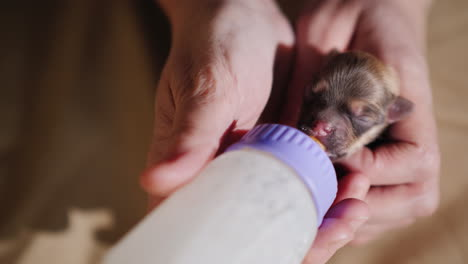 Woman-Feeds-Milk-To-A-Newborn-Puppy-From-Bottle-06