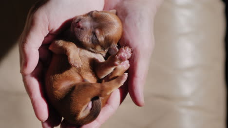 A-Man-Holds-A-Newborn-Puppy-In-The-Palm-Of-His-Hand-05