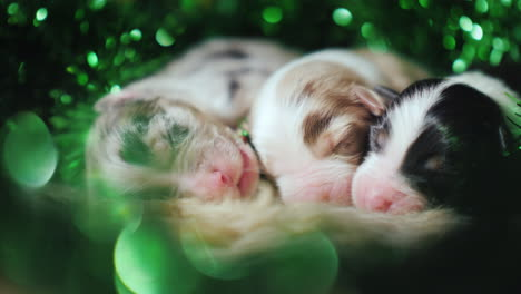 Puppies-In-Green-Decor-For-St-Patrick-s-Day
