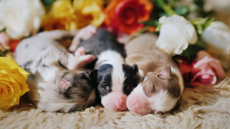 A-Few-Small-Puppies-Near-A-Bouquet-Of-Flowers