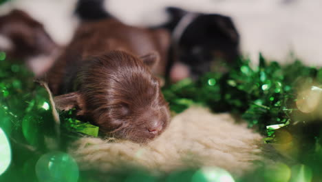 Puppies-In-Green-Decor-For-St-Patrick-s-Day-02