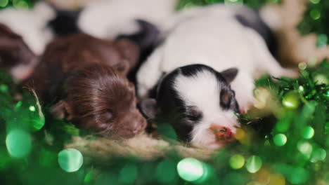 Puppies-In-Green-Decor-For-St-Patrick-s-Day-03