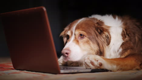 Dog-Looks-At-Laptop-Screen-01