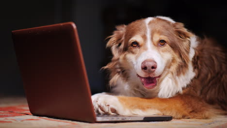 Dog-Looks-At-Laptop-Screen-02