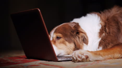 Dog-Looks-At-Laptop-Screen-06