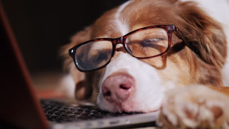 Dog-Looks-At-Laptop-Screen-07