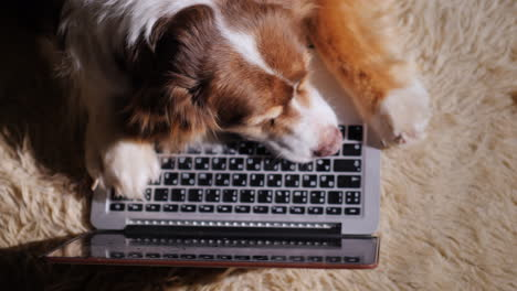 Dog-Looks-At-Laptop-Screen-08