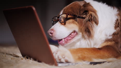 Dog-Looks-At-Laptop-Screen-09