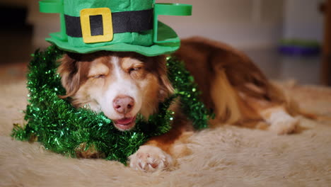 Dog-Dressed-For-St-Patrick-s-Day-01