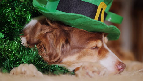 Dog-Dressed-For-St-Patrick-s-Day-02