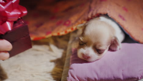 Cute-Newborn-Puppy-Sleeps-In-His-Bed