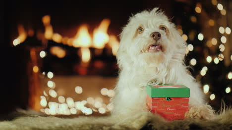 A-Dog-Sits-Near-A-Gift-In-The-Background-Of-A-Fireplace-Where-The-Fire-Burns