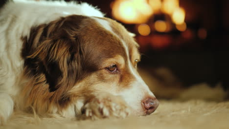 The-Dog-Lies-On-The-Mat-In-The-Living-Room-Behind-The-Fire-Burns-In-The-Fireplace