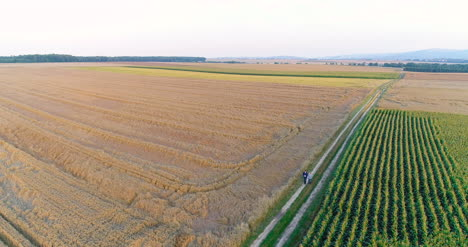 Aerial-View-Of-Growing-Corn-On-Agriculture-Field-Farmers-Walking-At-Agricultural-Field-1