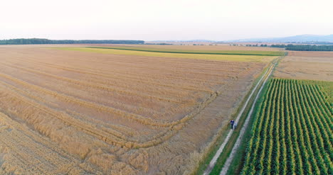Aerial-View-Of-Growing-Corn-On-Agriculture-Field-Farmers-Walking-At-Agricultural-Field-2