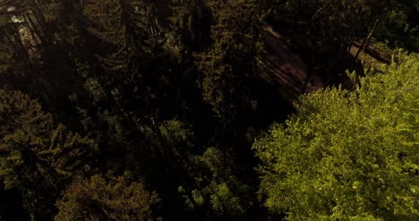 Flying-Over-Forest-Forest-From-Above-2