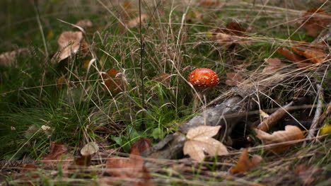 Dangerous-Red-Toadstool-In-Forest-3