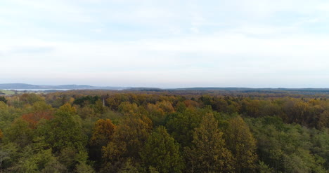 Flying-Over-Forest-Forest-From-Above-8