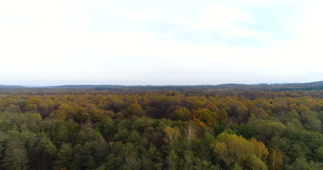 Flying-Over-Forest-Forest-From-Above-9