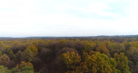 Flying-Over-Forest-Forest-From-Above-10