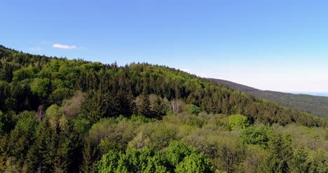Forest-From-Above-Aerial-View-Of-Forest-