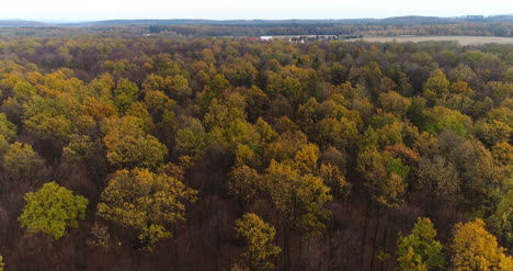 Flying-Over-Forest-Forest-From-Above-11