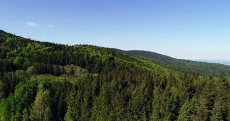 Aerial-View-Of-Forest-7
