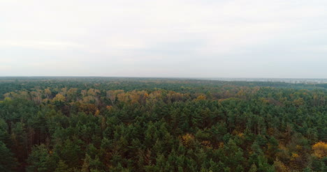 Flying-Over-Forest-Forest-From-Above-15