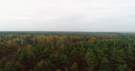 Flying-Over-Forest-Forest-From-Above-16