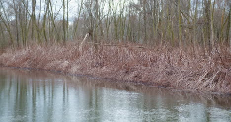 Man-Fishing-At-Lakeshore-In-Forest-11
