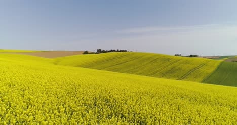 Scenic-View-Of-Canola-Field-Against-Sky-7
