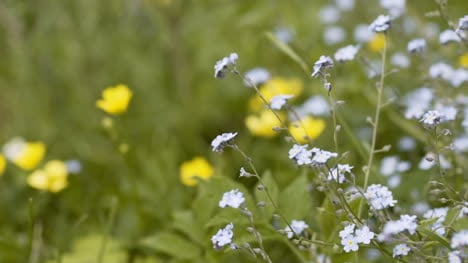 Nature-Close-Up-Of-Flowers-At-Meadow-In-Summer-1