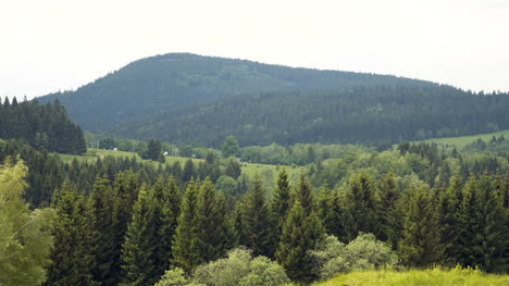 Forest-Trees-Landscape-Panorama-