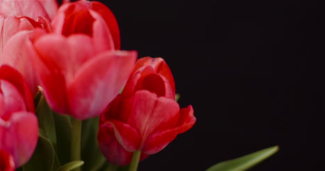 Fresh-Flowers-Tulips-On-Black-Background-6