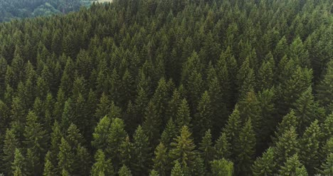 Flying-Over-The-Beautiful-Forest-Trees-Landscape-Panorama-61