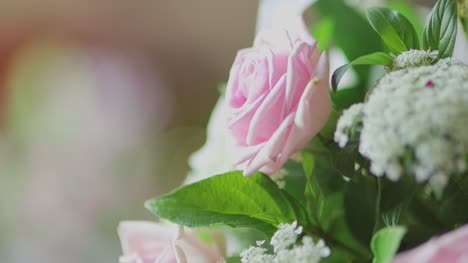 Free Flower Stock Video Footage Download 4k Hd 3598 Clips