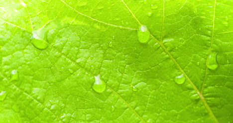 Water-Drops-On-Leaf-Surface-16
