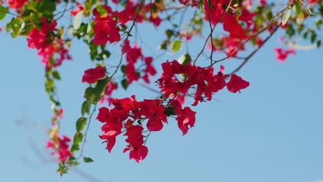 Exotic-Flowers-On-A-Background-Of-Blue-Sky