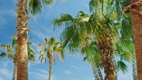 Tropical-Palm-Trees-Against-The-Sky