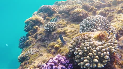 The-Rich-Underwater-World-Of-The-Red-Sea