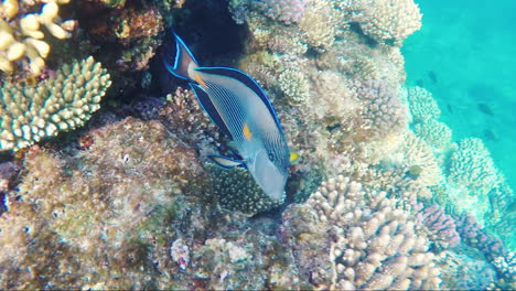 Picturesque-Marine-Life-Near-The-Coral-Reef