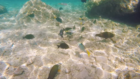 Variety-Of-Sea-Fish-On-The-Background-Of-Coral-Reefs