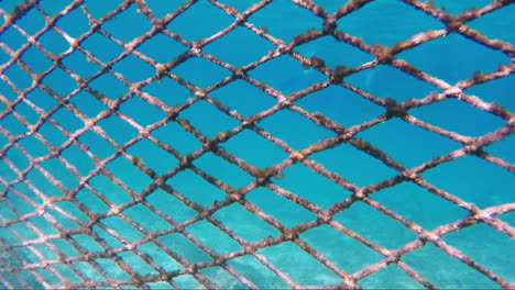 Mesh-For-Protecting-The-Sea-Coast-From-Sea-Fish
