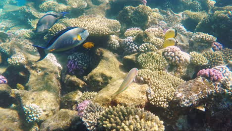 Multicolored-Marine-Life-Of-The-Underwater-World-With-Reefs