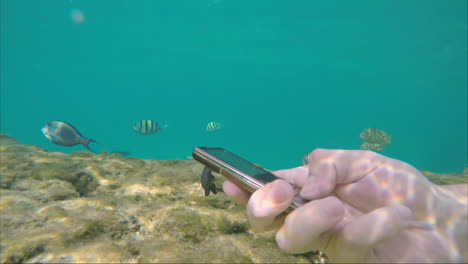 The-Smartphone-Is-Drowning-In-The-Sea-Water-Around-The-Swimming-Fish-Freedom-From-Technology