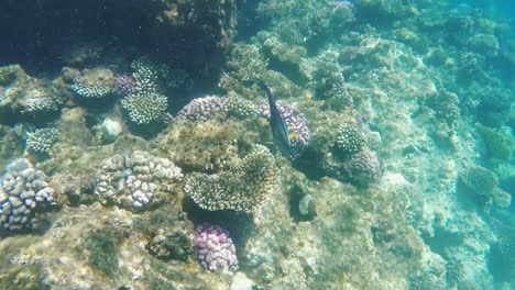 The-Rich-Underwater-World-Of-The-Coral-Reef