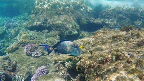 Exotic-Fish-Near-The-Surf-Line-Underwater
