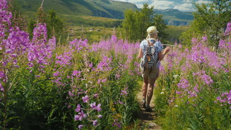 An-Active-Woman-Walks-Through-A-Beautiful-Valley-Among-Flowering-Flowers-Against-The-Backdrop-Of-Mou